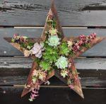 Succulent star